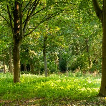 arboretum Landgoed Bredius Woerden